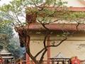 hu-zhong-si-2